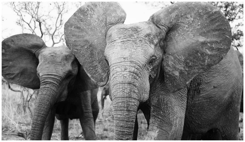 éléphants-burkina-faso