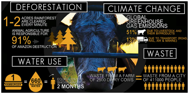 cowspiracy Le secret de la durabilité