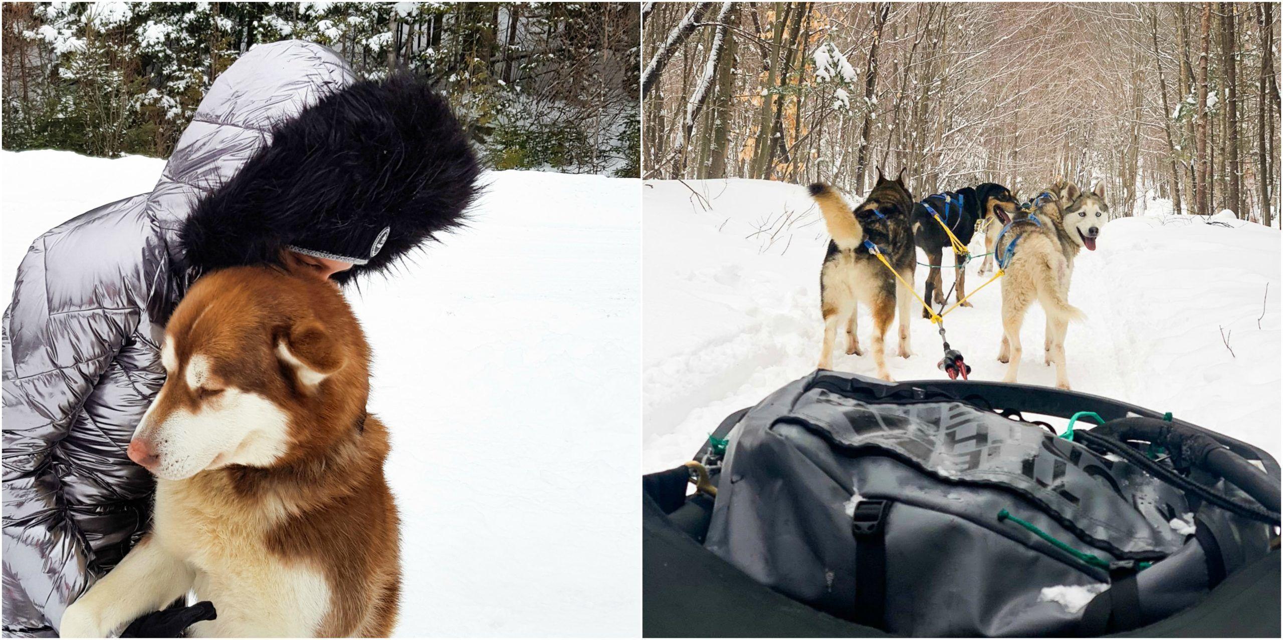 balade en traineau à chiens